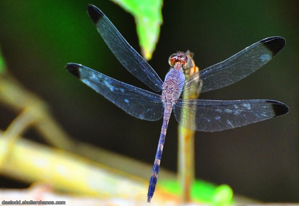 photoblog image Costa Rican Wildlife